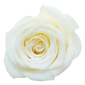 ベベ ローズ ブライダルホワイト 小分け 1輪入 プリザーブドフラワー 花材 材料 solargift