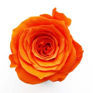 ベベ ローズ オレンジ 小分け 1輪入 プリザーブドフラワー 花材 solargift