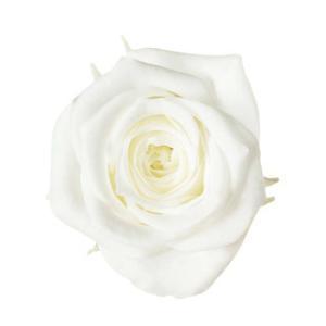プリザーブドフラワー 花材 アヴァ ローズ プリンセスホワイト 小分け 1輪 バラ売りの画像
