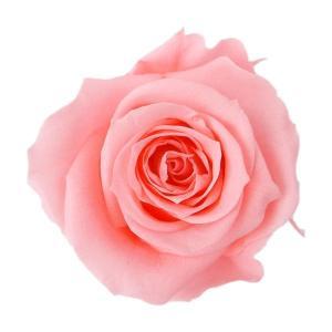 アイネスローズ ピンクネクター 小分け 1輪入 プリザーブドフラワー 花材|solargift