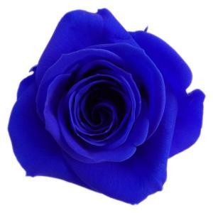 アイネスローズ サファイアブルー 小分け 1輪入 プリザーブドフラワー 花材 材料|solargift