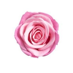 アイネスシスター マキアージュ ローズ ピンク/ブルゴーニュ 小分け 1輪入 プリザーブドフラワー 花材|solargift
