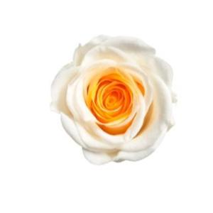 アイネスシスター ミニヨン ローズ イエロー/オレンジ 小分け 1輪入 プリザーブドフラワー 花材|solargift