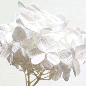 プリザーブドフラワー 花材 アジサイ 小分け約4g|solargift