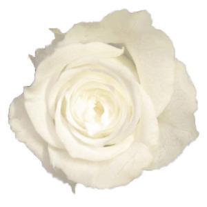 プリンセス ローズ ホワイト 小分け 1輪入 プリザーブドフラワー 材料 花材|solargift