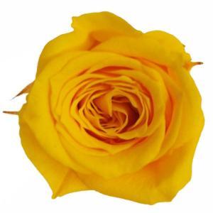 プリンセス ローズ サフランイエロー 小分け 1輪入 プリザーブドフラワー 花材|solargift
