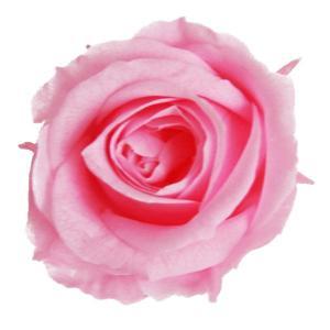 プリンセス ローズ ブライダルピンク 小分け 1輪入 プリザーブドフラワー 材料 花材|solargift