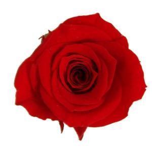 プリンセス ローズ レッド 小分け 1輪入 プリザーブドフラワー 花材|solargift