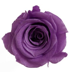 プリンセス ローズ ライラック 小分け 1輪入 プリザーブドフラワー 花材|solargift