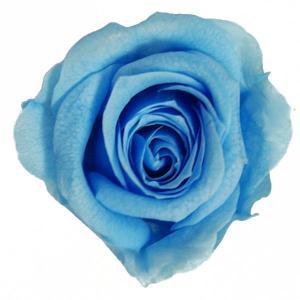 プリンセス ローズ ハワイアンブルー 小分け 1輪入 プリザーブドフラワー 花材|solargift