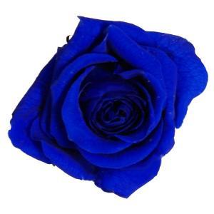 プリンセス ローズ ロイヤルブルー 小分け 1輪入 プリザーブドフラワー 材料 花材|solargift