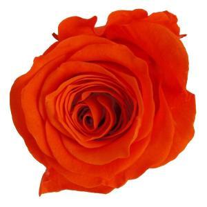 プリンセス ローズ オレンジ 小分け 1輪入 プリザーブドフラワー 花材|solargift