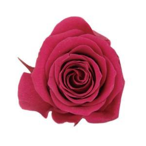 プリンセス ローズ ドルチェピンク 小分け 1輪入 プリザーブドフラワー 材料 花材|solargift