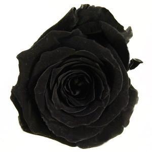 プリンセス ローズ ブラック 小分け 1輪入 プリザーブドフラワー 材料 花材|solargift