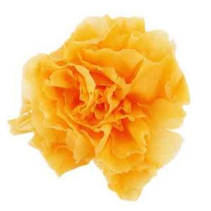 ミニカーネーション ピーチ 小分け 1輪入 プリザーブドフラワー 材料 花材|solargift