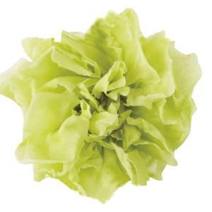 ミニカーネーション フレッシュグリーン 小分け 1輪入 プリザーブドフラワー 材料 花材|solargift