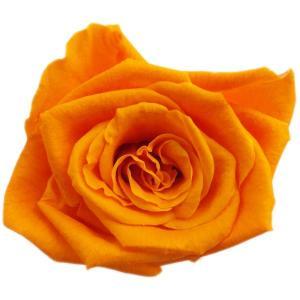キティ ローズ プリザーブドフラワー 材料 花材 ブライトオレンジ 小分け 1輪入 solargift
