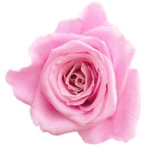 キティ ローズ プリザーブドフラワー 材料 花材 スイートピンク 小分け 1輪入 solargift
