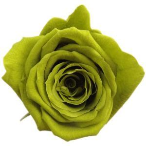 キティ ローズ オリーブグリーン 小分け 1輪入 プリザーブドフラワー 材料 花材 solargift