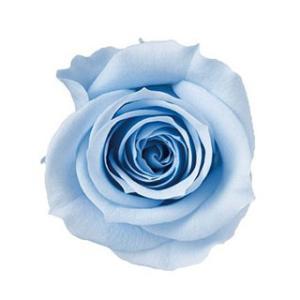 アヴァローズ スカイブルー 小分け 1輪入 プリザーブドフラワー 花材 材料|solargift