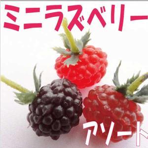 アソートミニラズベリー 3色アソート 小分け 3個入 東京堂|solargift