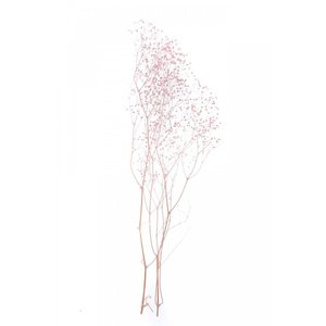 かすみ草 プリザーブドフラワー 花材 ソフトミニカスミソウ ピンク 小分け そらプリ|solargift