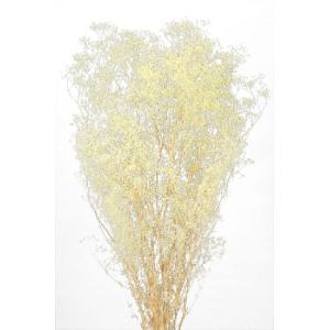 かすみ草 プリザーブドフラワー 花材 ソフトミニカスミソウ クリーム 小分け そらプリ|solargift