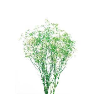 かすみ草 プリザーブドフラワー ミニカスミソウ フラワーベール 白/グリーン 小分け solargift