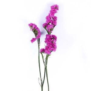プリザーブドフラワー 花材 ソフトスターチス ピンク 小分け プリザーブドフラワー 材料 小花 大地農園|solargift
