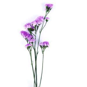 プリザーブドフラワー 花材 ソフトスターチス パープル 小分け プリザーブドフラワー 材料 小花 大地農園|solargift