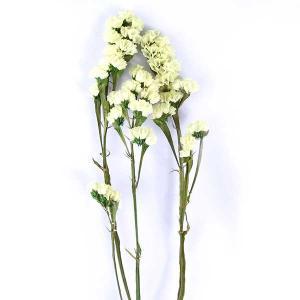 ソフトスターチス プリザーブドフラワー 材料 イエロー 小分け プリザーブドフラワー 花材 小花 大地農園|solargift