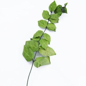 プリザーブドフラワー 材料 ハツユキ かずら グリーン 小分け 2本入 プリザーブドフラワー 花材 大地農園|solargift