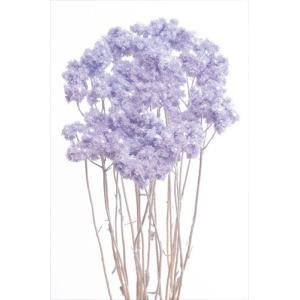 ドライフラワー 花材 クリスパム エンジェルパープル 小分け|solargift