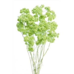 ドライフラワー 花材 クリスパム エンジェルグリーン 小分け|solargift