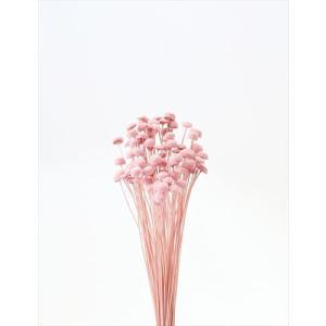 ボタンフラワー キャンディーピンク 小分け 約1/3〜1/4袋 花材 プリザーブドフラワー 材料 大地農園|solargift