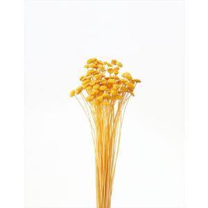 ボタンフラワー ゴールデンイエロー 小分け 約1/3〜1/4袋 花材 プリザーブドフラワー 材料 大地農園|solargift