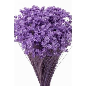 そらプリ ドライフラワー 花材 スターフラワー ミニ ライトパープル 小分け約1/3〜1/4袋|solargift