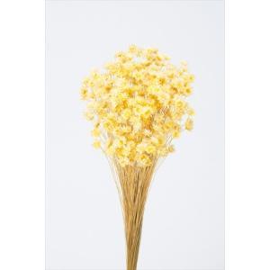 そらプリ ドライフラワー 花材 スターフラワーブロッサム モーニングイエロー 小分け|solargift