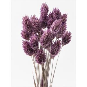ドライフラワー 花材 ポアプランツ クラシックパープル 約15g 大地農園|solargift