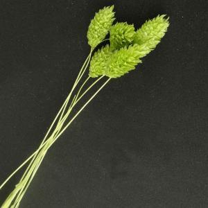 ポアプランツ グリーンラメ 小分け 約5本入 花材 材料 大地農園|solargift