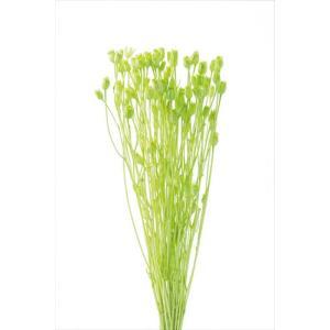 ハーバリウム 花材 ドライフラワー フローレンティナ グリーン 小分け|solargift