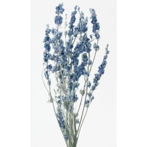 デルフィニューム ウォッシュホワイト 小分け 花材 材料 大地農園|solargift