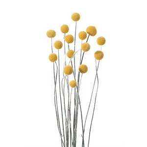 ビリーボタン サイズミックス ナチュラル 小分け 4本入 花材 材料 大地農園 solargift