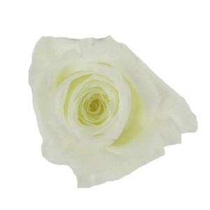 アヴァローズ アイボリー 小分け 1輪入 プリザーブドフラワー 花材|solargift