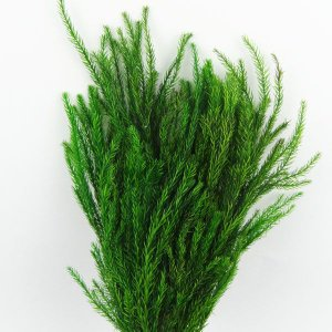 プリザーブドフラワー 材料 ソフトたちかずら グリーン 小分け 1本入 プリザーブドフラワー 花材 大地農園|solargift