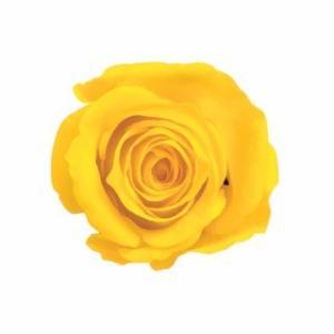 アヴァローズ カナリアイエロー 小分け 1輪入 プリザーブドフラワー 花材|solargift