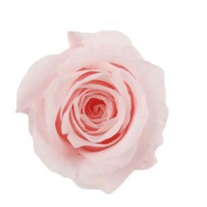 アヴァローズ ベイビーピンク 小分け 1輪入 プリザーブドフラワー 花材 材料|solargift