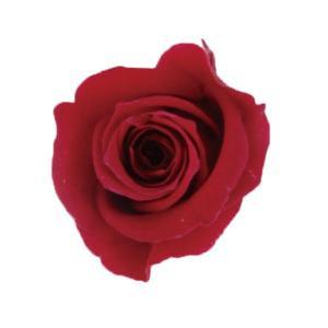 アヴァローズ バーガンディ 小分け 1輪入 プリザーブドフラワー 花材|solargift