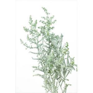 プリザーブドフラワー 花材 ソフトストーベ フロッキーグリーン 袋 約50g入 プリザーブドフラワー 材料 大地農園|solargift