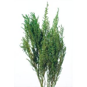プリザーブドフラワー 花材 ソフトストーベ ウォッシュグリーン 約50g 大地農園|solargift
